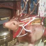 Reindeer's Miss Out On Their Sweets At Vicar Lane