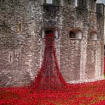 Council Ask For History Help To Aid Towns Poppy Display Bid